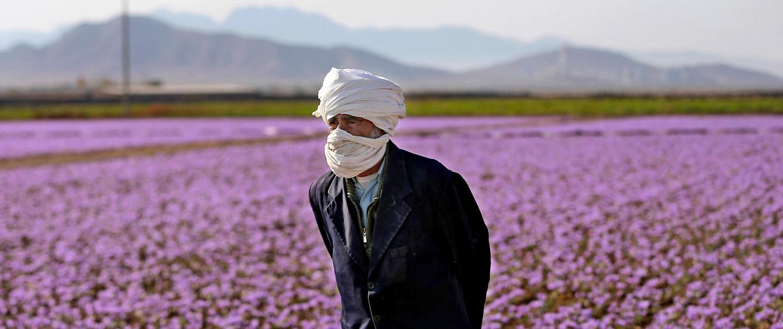 Настоящий шафран из Ирана. Как делают красное золото читайте в блоге про Иран bazariran.ru