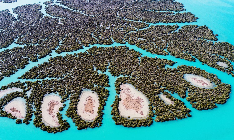 Хара мангровые леса на острове кешм Иран фото для блога bazariran.ru