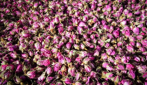 Иран – крупнейший мировой экспортер розовой воды